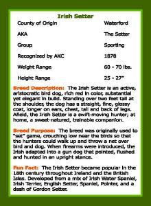 2019 Irish Setter_Trading Card_Page_2